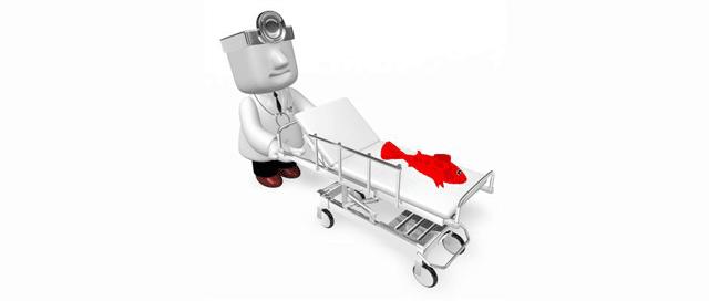doctor-fish