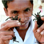 manger-des-araignees