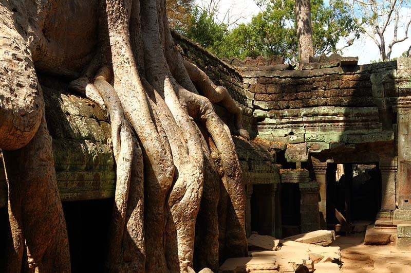 Ta Prohm - Tomb Raider