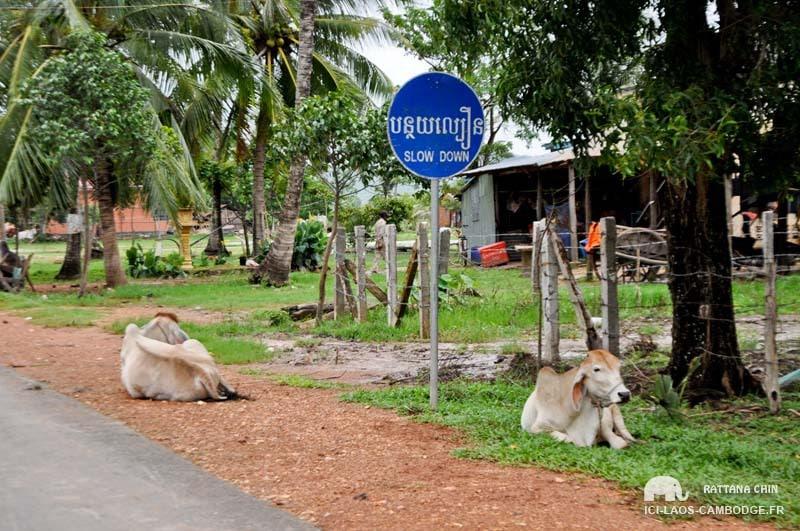 Insolite voyage Cambodge