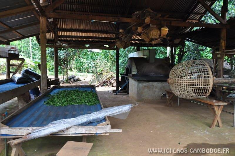 Production de thé
