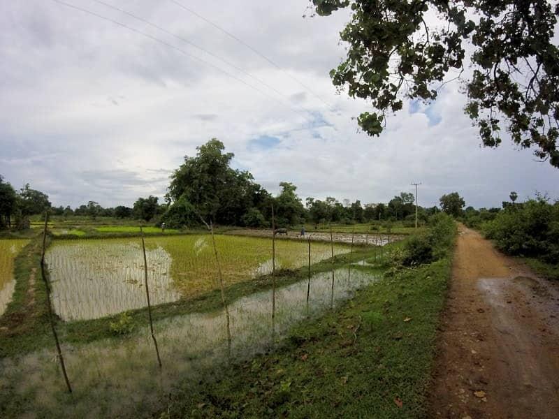 Rizière inondée 4000 îles