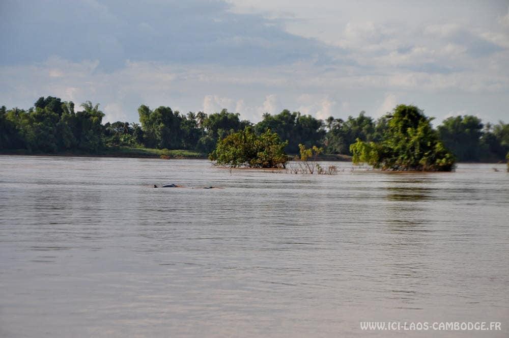 2 dauphins Irrawady Kratie