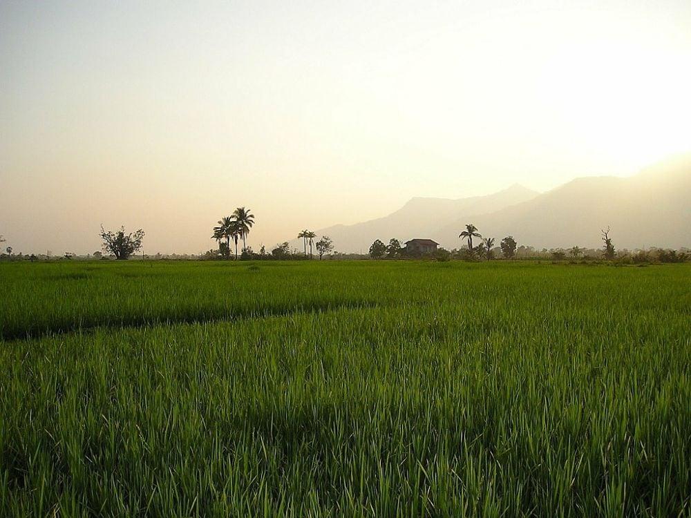 Rizière Laos