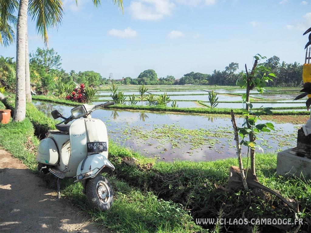 Visiter l'Indonésie - Rizière Ubud