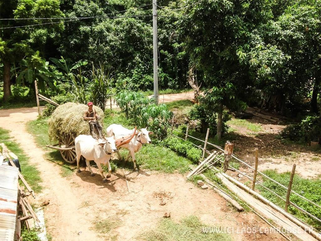 Vie à Koh Paen - Cambodge hors des sentiers battus