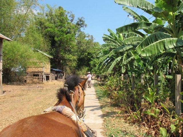 Cheval à Koh Trong