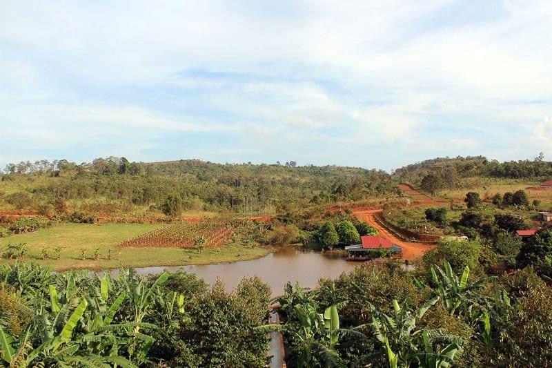 Sen Monorom plantation de café