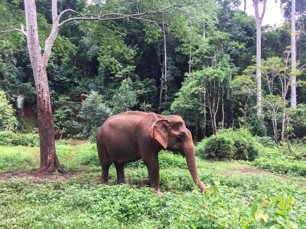 Elephant @ EVP