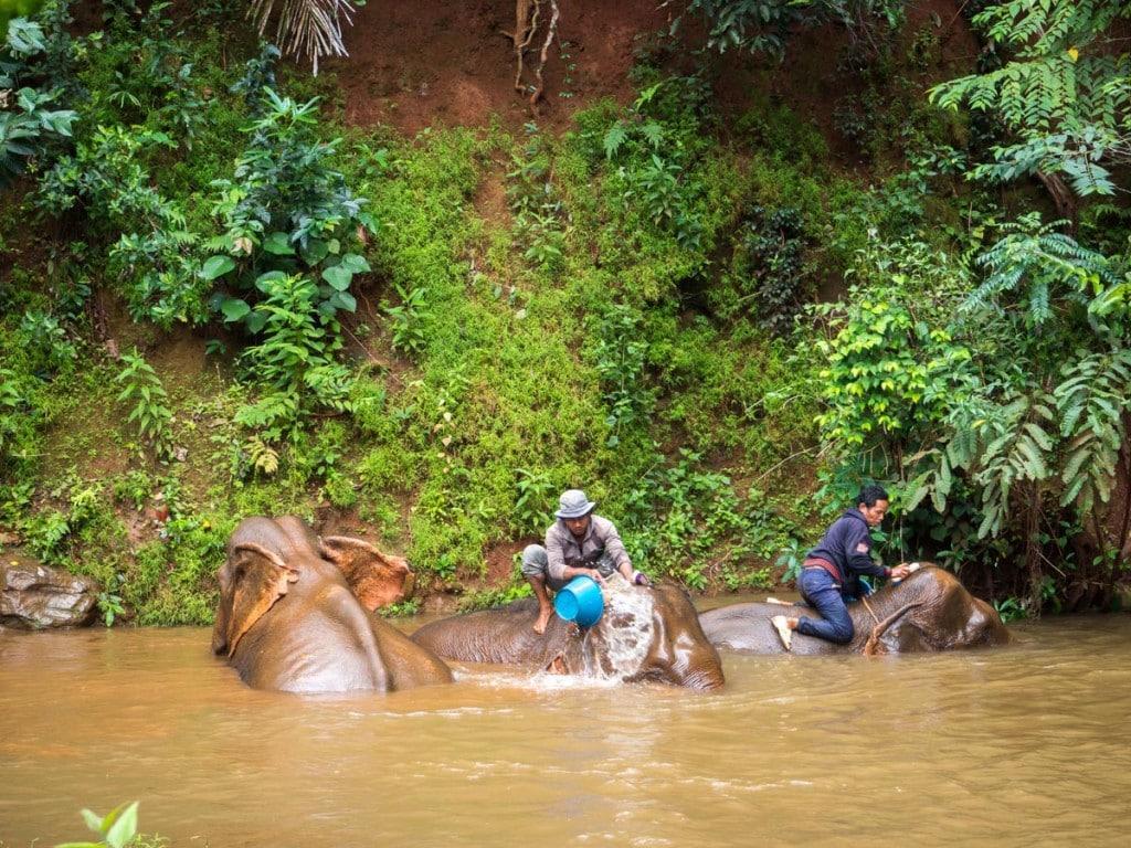 Bain avec les éléphants