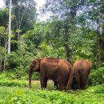 Eléphants de EVP Mondolkiri
