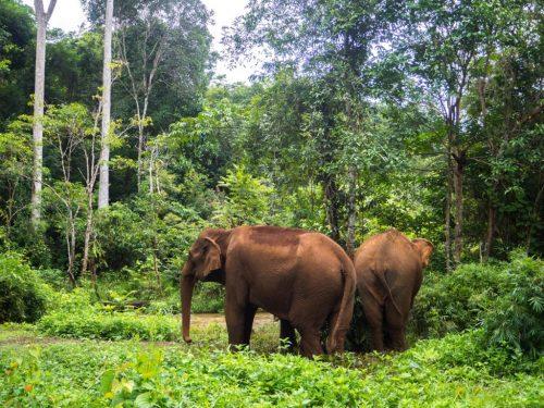 Trek: Une journée ou plus pour rencontrer les éléphants du Mondolkiri