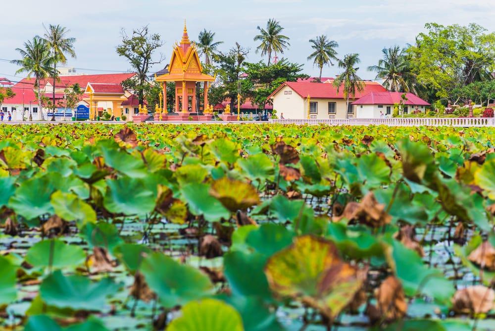 Fleur de lotus à Kampot