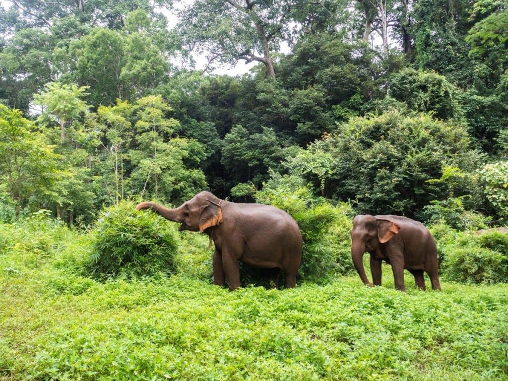 Repas pour éléphant