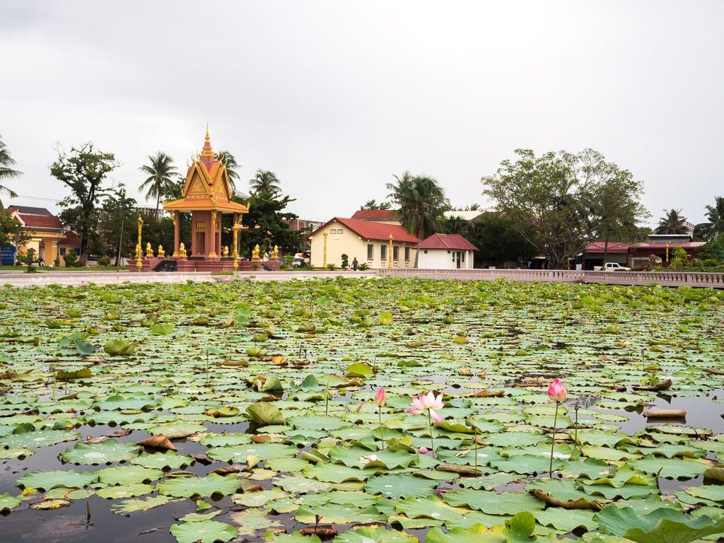 Bassin de lotus à Kampot