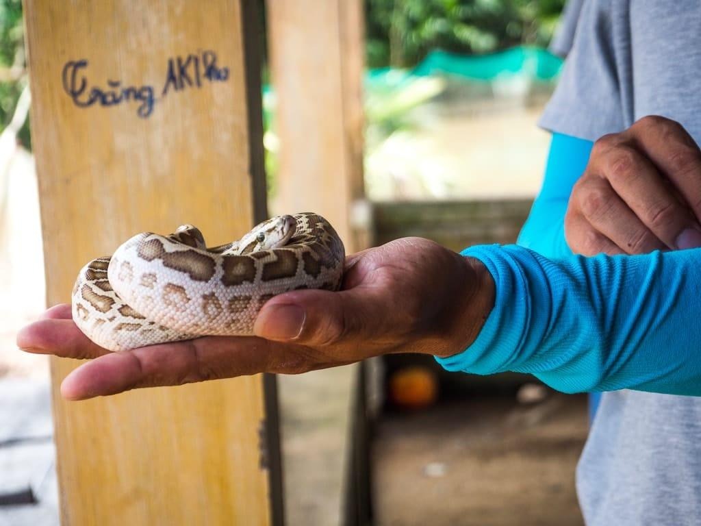 Bébé python