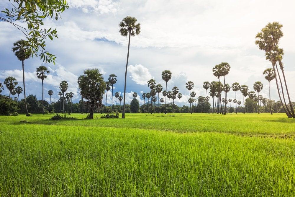 Cambodge rural