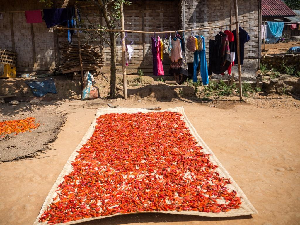 Piments séchés dans un village au bord de la Nam Ou