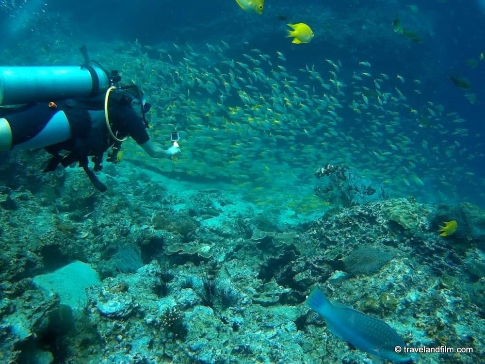 Plonger à Koh Phi Phi