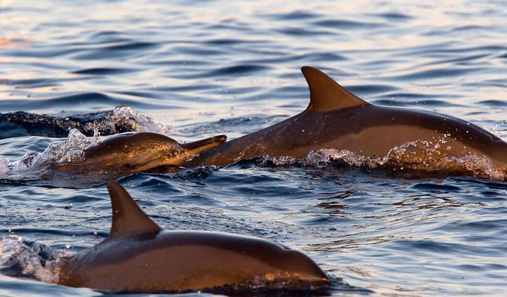 Que faire à Bali ? : Aller voir les dauphins à Lovina