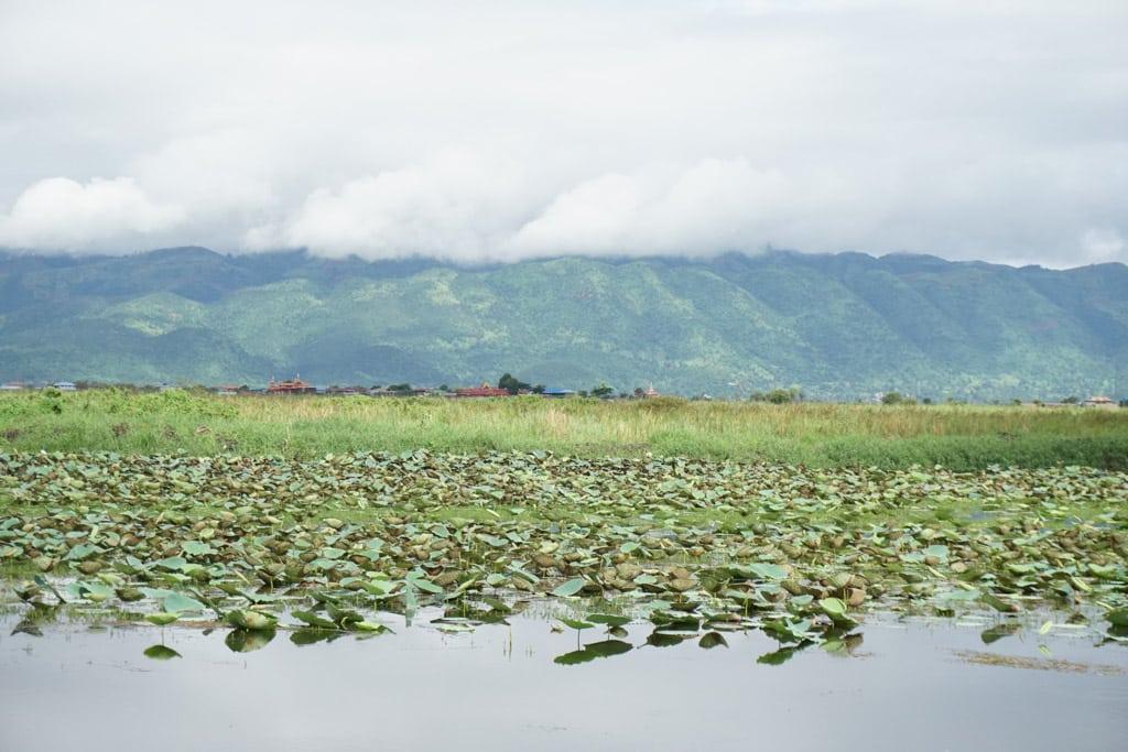 Vue de nénuphars sur le lac Inle