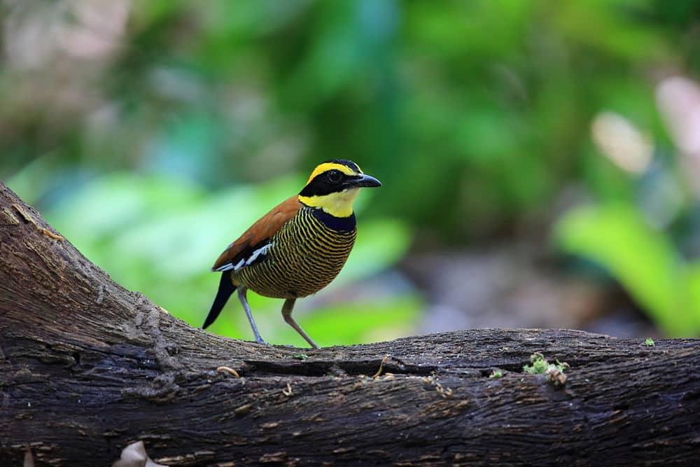 Oiseau au parc Bali Barat
