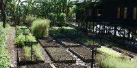 Jardin BIO au Inle Heritage Stilt Houses