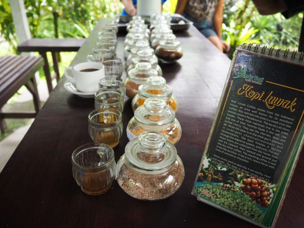 Que faire à Ubud ? : Découvrir la fabrication du kopi Luwak