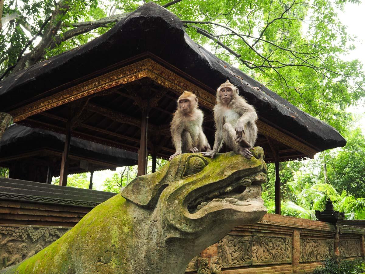 Que faire à Ubud ? : Aller au Monkey Forest
