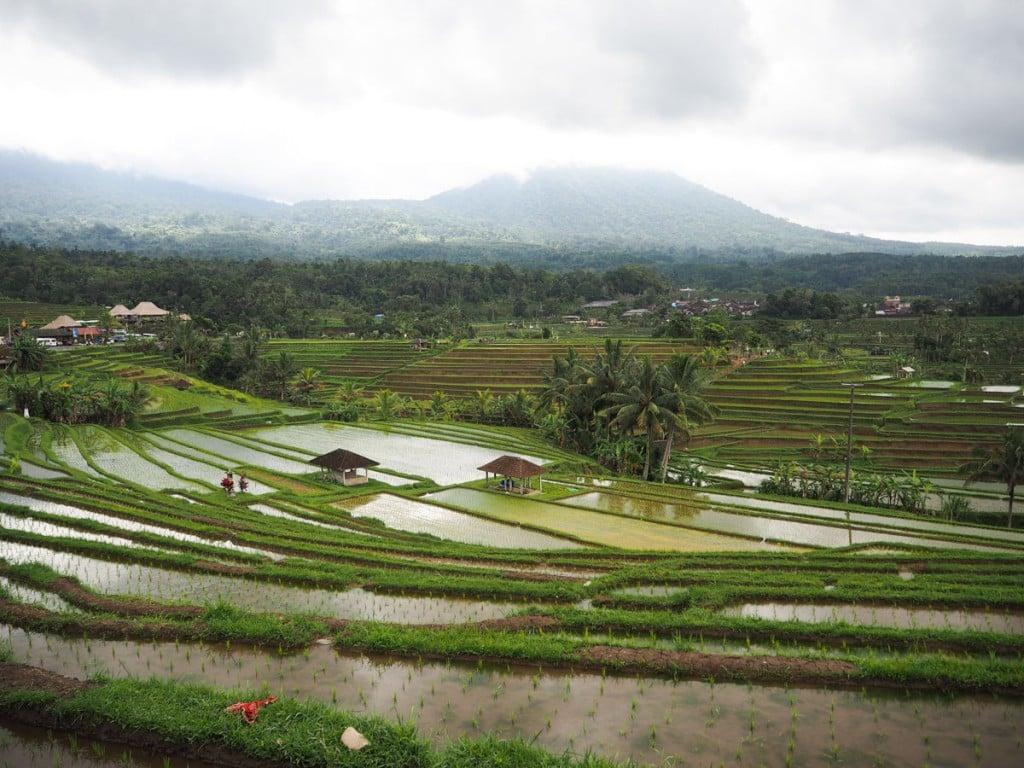 Que faire à Ubud ? : Voir les rizières de Jatiluwih