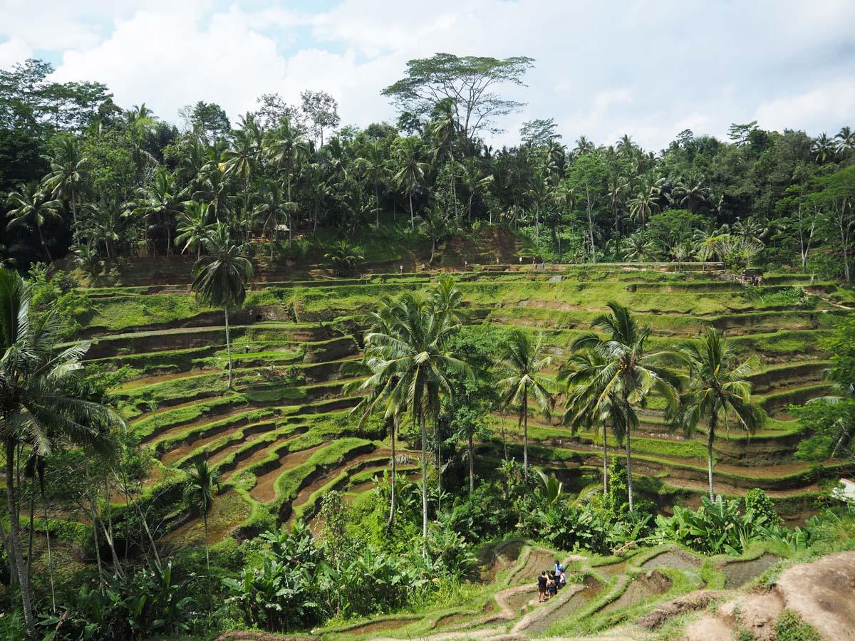 Que faire à Ubud ? : Voir les rizières de Tegalalang