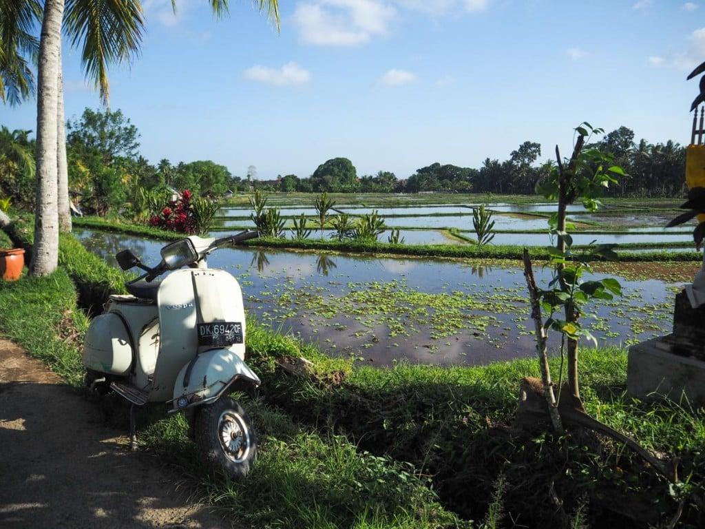 Que faire à Ubud ? : Aller aux rizières d'Ubud