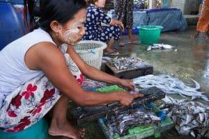 Découpe de poissons Village San Hlan - Dawei
