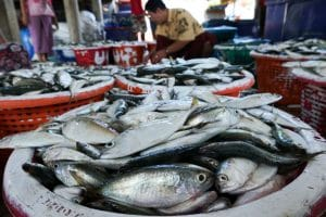 Panier de poissons au village San Hlan - Dawei