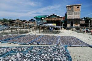 Séchage de poissons au village San Hlan - Dawei