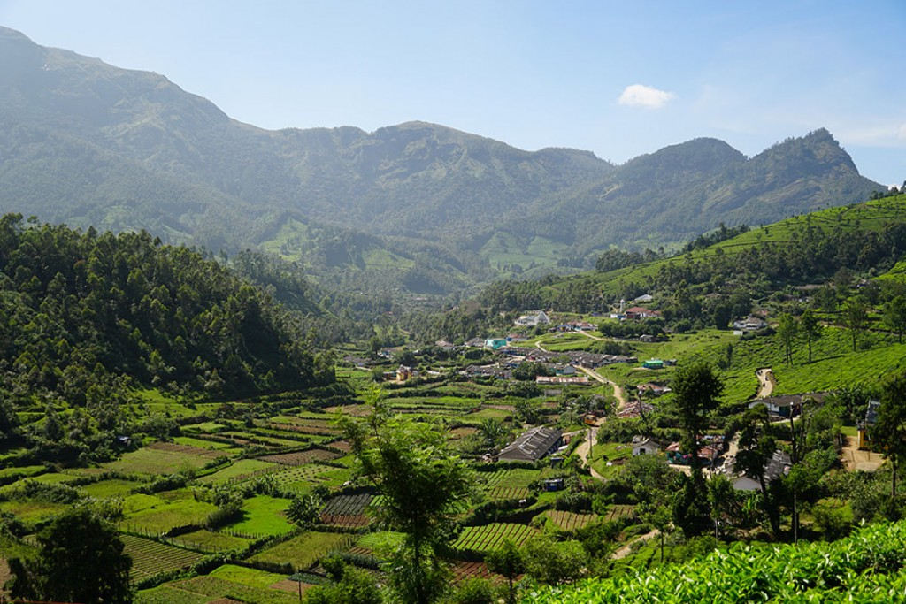 Munnar paysage