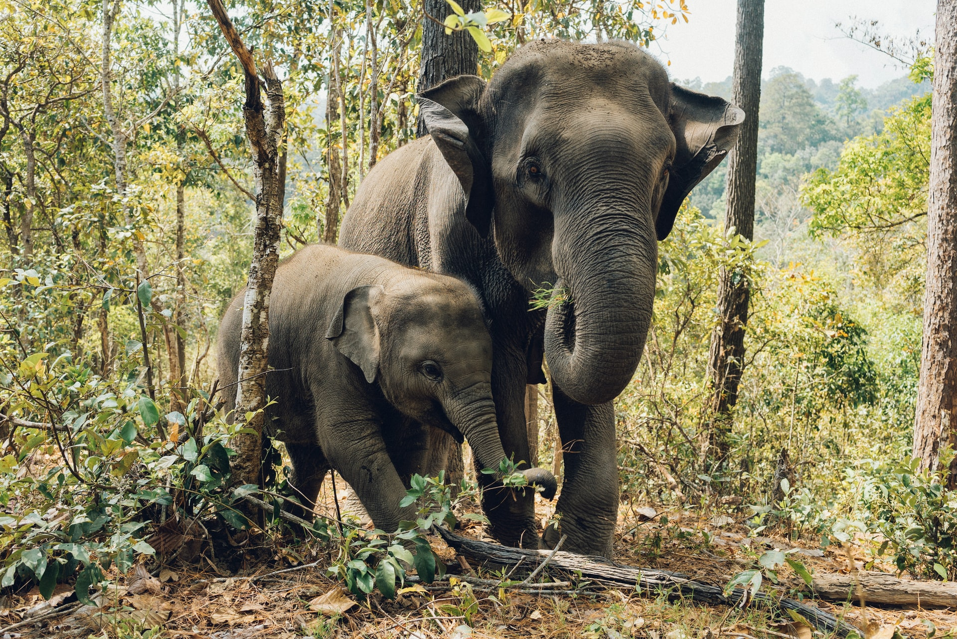 Eléphants Kanchanaburi